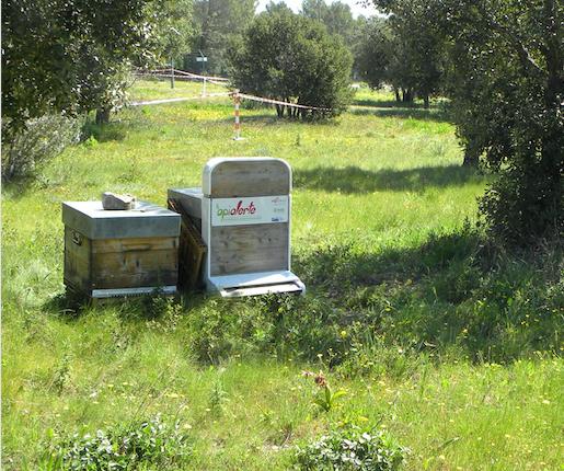 abeilles_15-10-2018