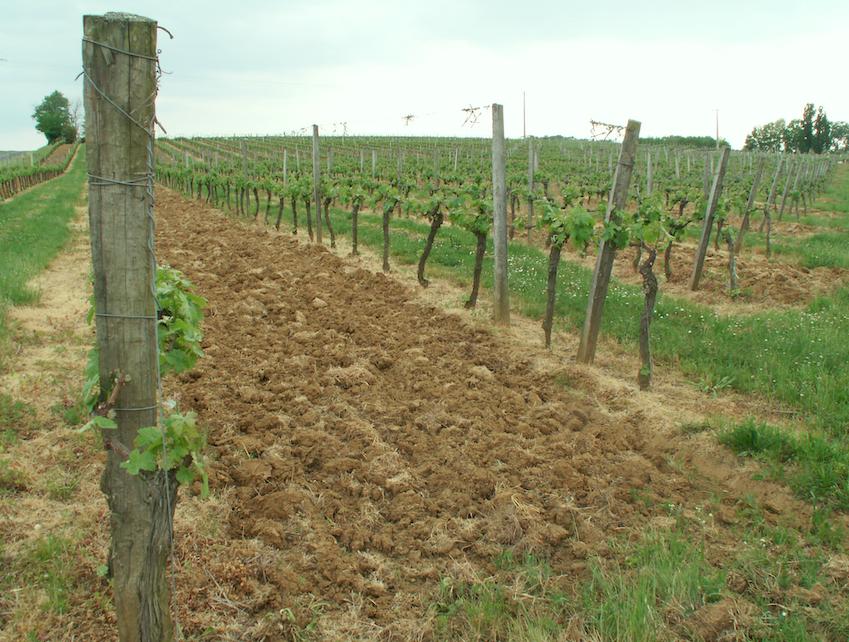 vignesprintemps